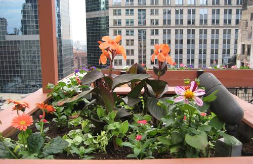 Rooftop Flowers